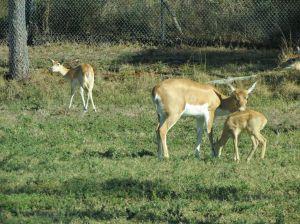 Lion Country Safari_06