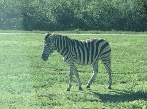 Lion Country Safari_11
