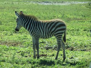 Lion Country Safari_12