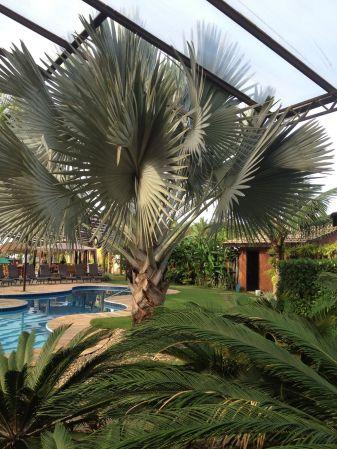 Pousada Villa Camboa Camburi_14